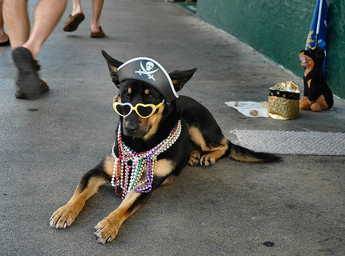 dog-pirate